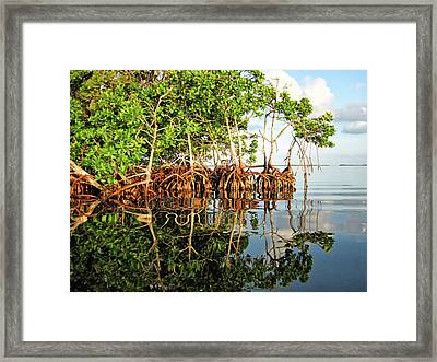 Trees In The Sea Framed Print