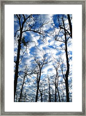 Framed Print featuring the photograph Trees In The Sky by Shari Jardina