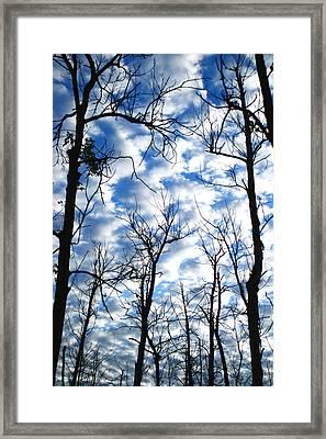 Trees In The Sky Framed Print by Shari Jardina
