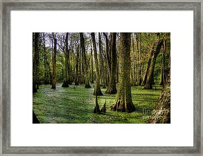 Trees In The Swamp Framed Print by Larry Braun