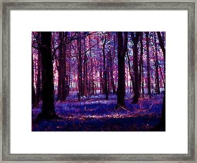 Framed Print featuring the photograph Trees In The Woods In Pink And Blue by Michelle Audas