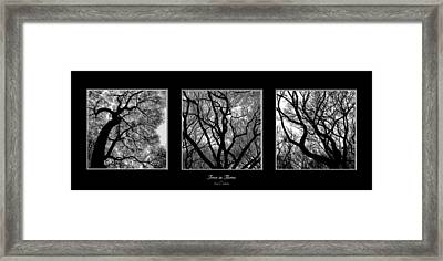 Trees In Threes Framed Print by Diane C Nicholson