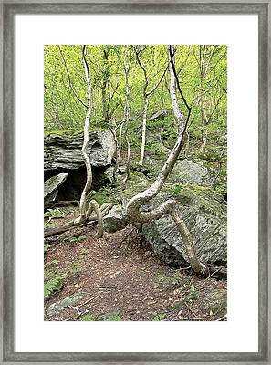 Trees In Vermont Framed Print by James Steele