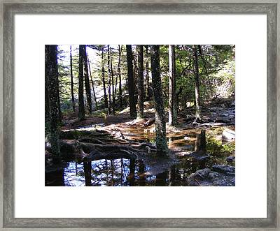 Trees In Water Framed Print by Alison Heckard