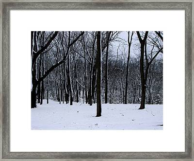 Trees In Winter Framed Print by Dave Clark