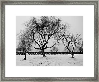 Trees In Winter Framed Print by Dean Harte