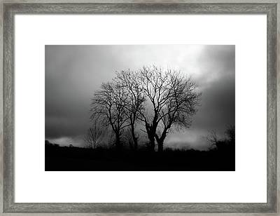 Trees Framed Print by James Clancy