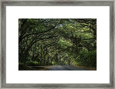 Trees Framed Print by James Vance