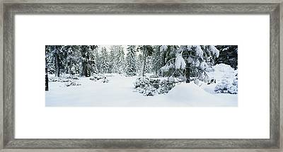 Trees Lake Tahoe Ca Framed Print by Panoramic Images