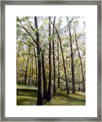Trees Framed Print by Lorna Skeie