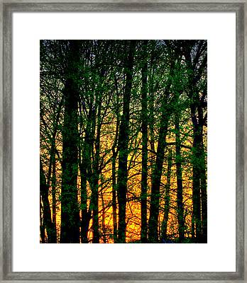 Trees No.2 Framed Print by Michael Putnam