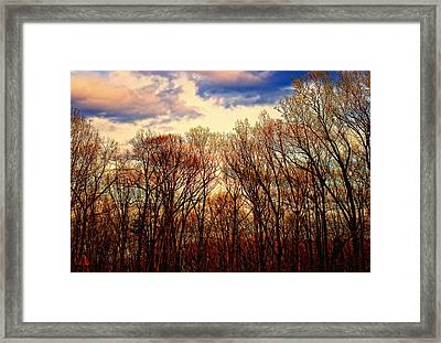 Trees No.3 Framed Print by Michael Putnam