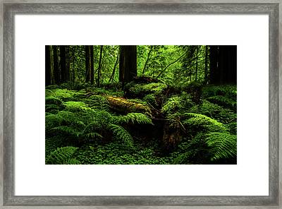 Framed Print featuring the photograph Trees Of Mystery by TL Mair