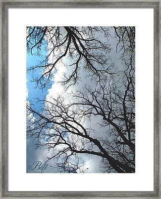 Trees Of Wildwood Framed Print