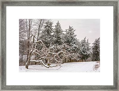 Trees Of Winter Framed Print