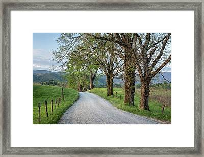 Trees On A Path Framed Print by Jon Glaser