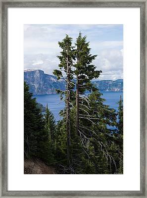 Trees On Crater Lake Oregon State Usa Framed Print by Alexander Fedin