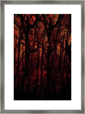 Trees On Fire Framed Print