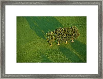 Trees On Green Framed Print by Heiko Koehrer-Wagner