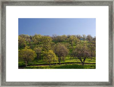 Trees On Hillside Framed Print