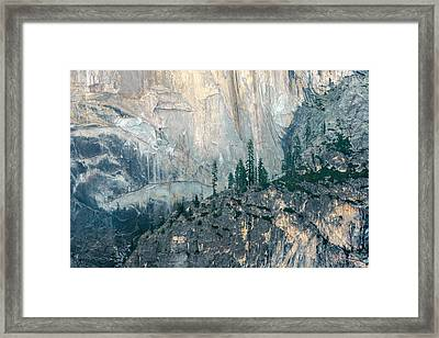 Trees On Ledge Framed Print