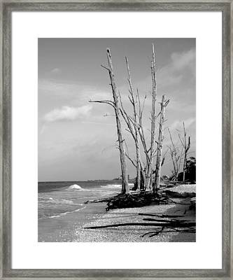 Trees On The Beach Black And White Framed Print by Rosalie Scanlon