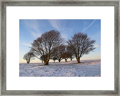 Trees On The Ring Framed Print