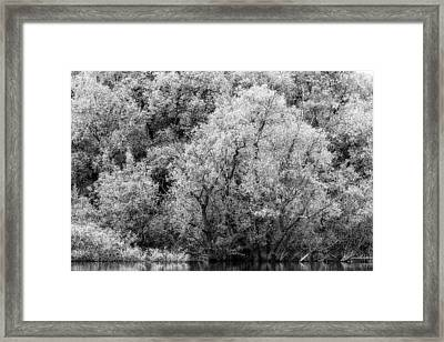 Trees On The River Framed Print