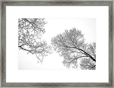 Trees Reaching Framed Print by Marilyn Hunt