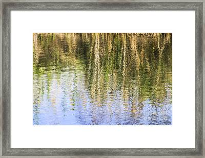 Trees Reflect In Water  Framed Print by Vladi Alon