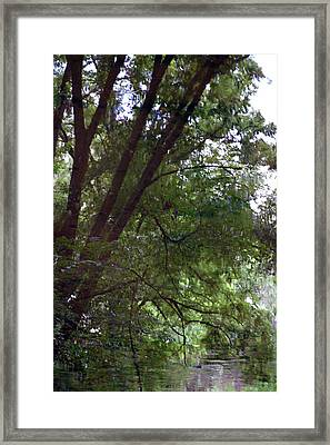 Trees Reflected In A Woodland Stream 2867 H_2 Framed Print