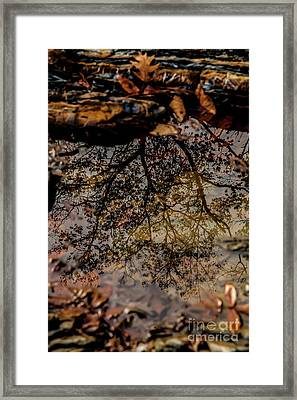 Framed Print featuring the photograph Tree's Reflection by Iris Greenwell