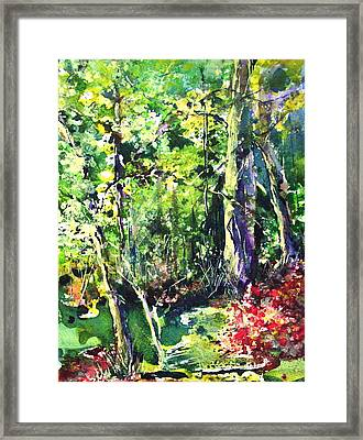 Trees Framed Print by Robin Miller-Bookhout