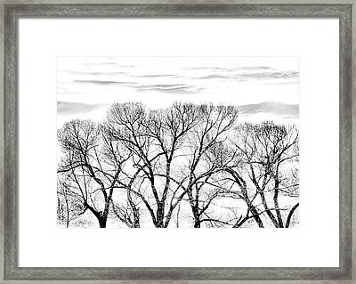 Framed Print featuring the photograph Trees Silhouette Black And White by Jennie Marie Schell