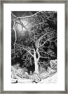 Framed Print featuring the painting Trees Sky And Sun Ap by Dan Carmichael