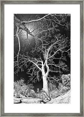 Framed Print featuring the photograph Trees Sky And Sun by Dan Carmichael