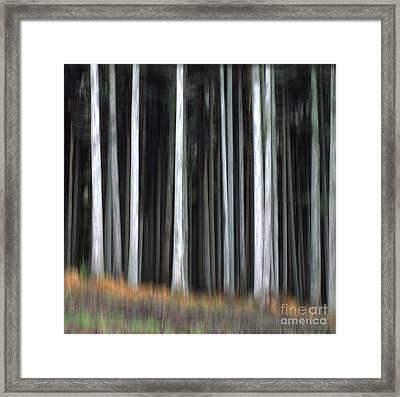 Trees Trunks Framed Print by Bernard Jaubert