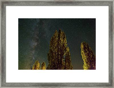 Trees Under The Milky Way On A Starry Night Framed Print