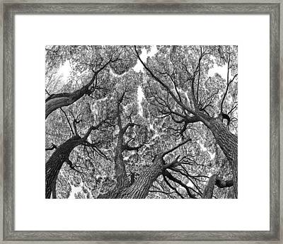 Framed Print featuring the photograph Trees by Vladimir Kholostykh