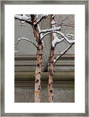 Trees Wall And Snow Framed Print by Robert Ullmann