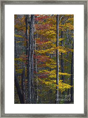 Trees With Autumn Colors 8260c Framed Print