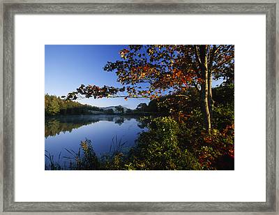 Trees With Fall Colors Along The Still Framed Print by Michael Melford