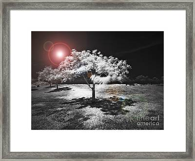 Trees With Science Fiction Sky 91774031 Framed Print