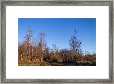 Trees With The Moon Framed Print