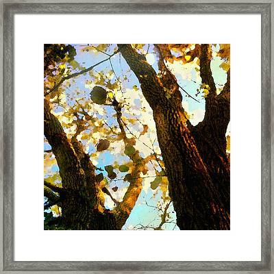 Framed Print featuring the digital art Treetop Abstract-look Up A Tree by Shelli Fitzpatrick