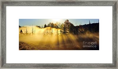 Treetop Shadows Framed Print