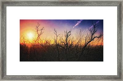 Treetop Silhouette - Sunset At Lapham Peak #1 Framed Print by Jennifer Rondinelli Reilly - Fine Art Photography