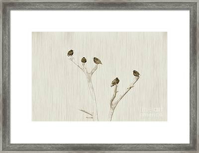 Treetop Starlings Framed Print by Benanne Stiens