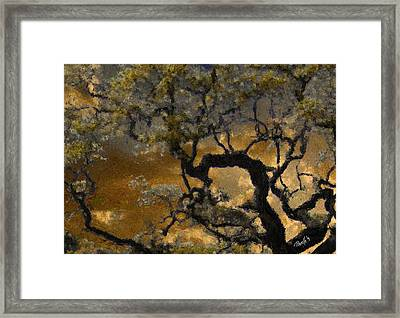 Treetop Sunset Framed Print by Jim Pavelle