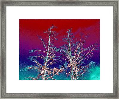 Treetops 4 Framed Print